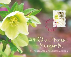 24 Christrosen-Momente von Nusser-Lampe,  Elsbeth