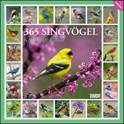 365 Singvögel 2021 – Broschürenkalender – Wandkalender – mit Poster – Format 30 x 30 cm
