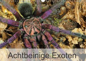 Achtbeinige Exoten (Wandkalender 2018 DIN A3 quer) von Kairat - dewolli.de,  Wolfgang