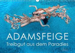 ADAMSFEIGE – Treibgut aus dem Paradies (Wandkalender 2021 DIN A3 quer) von Allgaier (www.ullision.de),  Ulrich