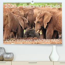 ADDO ELEPHANT NATIONAL PARK Elefanten Babies (Premium, hochwertiger DIN A2 Wandkalender 2020, Kunstdruck in Hochglanz) von Fraatz,  Barbara