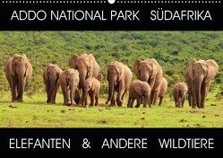 ADDO NATIONAL PARK SÜDAFRIKA – ELEFANTEN & ANDERE WILDTIERE (Wandkalender 2020 DIN A2 quer) von Fraatz,  Barbara