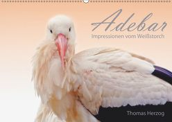 ADEBAR (Wandkalender 2019 DIN A2 quer) von Herzog,  Thomas, www.bild-erzaehler.com