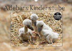 Adebars Kinderstube (Wandkalender 2019 DIN A3 quer) von Di Chito,  Ursula
