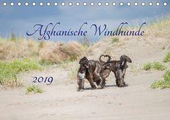 AFGHANISCHE WINDHUNDE 2019 (Tischkalender 2019 DIN A5 quer) von Mirsberger tierpfoto.de,  Annett