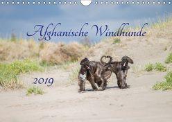 AFGHANISCHE WINDHUNDE 2019 (Wandkalender 2019 DIN A4 quer) von Mirsberger tierpfoto.de,  Annett