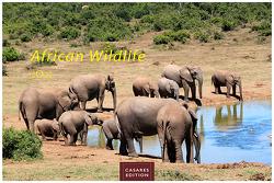African Wildlife 2022 S 24x35cm