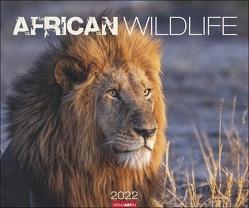 African Wildlife Kalender 2022 von Weingarten