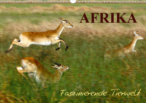 Afrika – Faszinierende Tierwelt (Wandkalender 2021 DIN A3 quer) von Haase,  Nadine