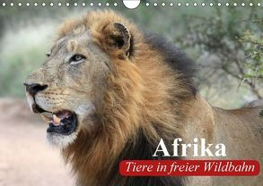 Afrika. Tiere in freier Wildbahn (Wandkalender 2018 DIN A4 quer) von Stanzer,  Elisabeth