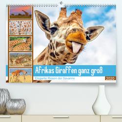 Afrikas Giraffen ganz groß: Elegante Riesen der Savanne (Premium, hochwertiger DIN A2 Wandkalender 2020, Kunstdruck in Hochglanz) von CALVENDO