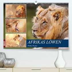 Afrikas Löwen 2021 (Premium, hochwertiger DIN A2 Wandkalender 2021, Kunstdruck in Hochglanz) von Woyke,  Wibke