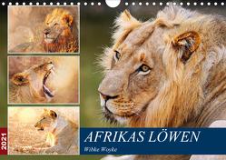 Afrikas Löwen 2021 (Wandkalender 2021 DIN A4 quer) von Woyke,  Wibke
