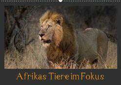 Afrikas Tiere im FokusAT-Version (Wandkalender 2019 DIN A2 quer) von Schörkhuber,  Johann