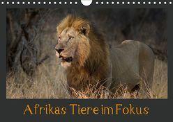 Afrikas Tiere im FokusAT-Version (Wandkalender 2019 DIN A4 quer) von Schörkhuber,  Johann