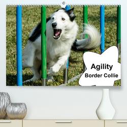 Agility Border Collie (Premium, hochwertiger DIN A2 Wandkalender 2020, Kunstdruck in Hochglanz) von homwico
