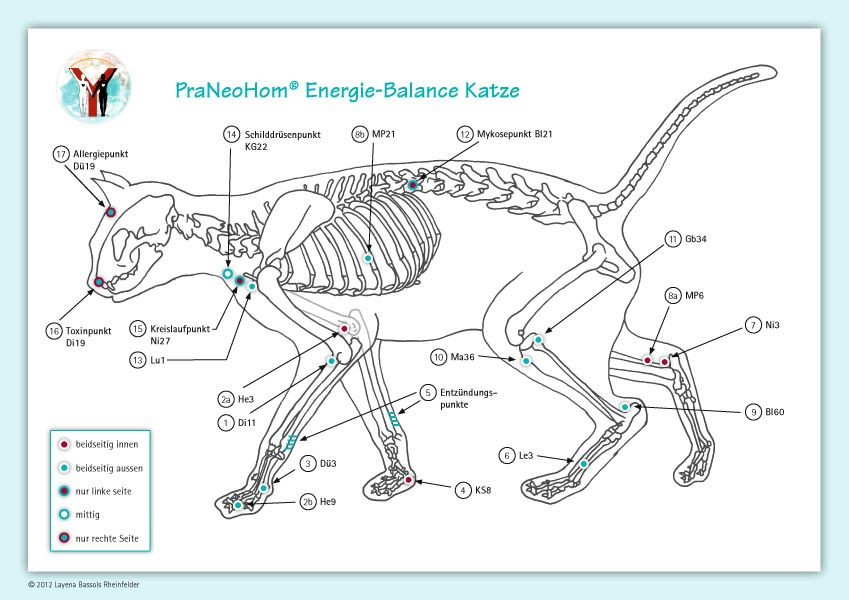Ziemlich Katzen Anatomie Diagramm Galerie - Anatomie Ideen - finotti ...