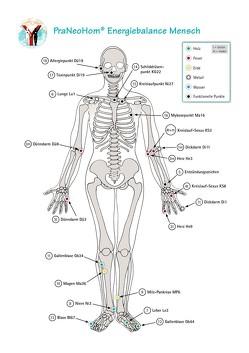 Akupunktur-Tafel Mensch von Bassols Rheinfelder,  Layena