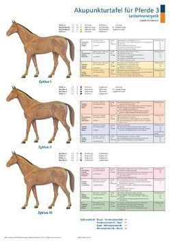 Akupunkturtafel für Pferde 3 + 4 von Krokowski,  Carola