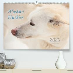 Alaskan Huskies (Premium, hochwertiger DIN A2 Wandkalender 2020, Kunstdruck in Hochglanz) von & Urbach,  Urbach