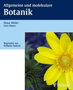 Allgemeine und molekulare Botanik von Nover,  Lutz, Weiler,  Elmar W.