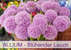 Allium Blühender Lauch (Wandkalender 2019 DIN A2 quer) von Kruse,  Gisela