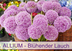 Allium Blühender Lauch (Wandkalender 2019 DIN A3 quer) von Kruse,  Gisela