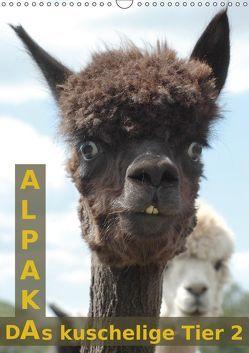 Alpaka, das kuschelige Tier 2 (Wandkalender 2019 DIN A3 hoch) von Brömstrup,  Peter