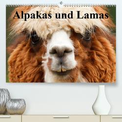 Alpakas und Lamas (Premium, hochwertiger DIN A2 Wandkalender 2021, Kunstdruck in Hochglanz) von Stanzer,  Elisabeth