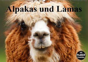 Alpakas und Lamas (Wandkalender 2019 DIN A2 quer) von Stanzer,  Elisabeth