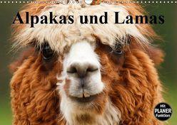 Alpakas und Lamas (Wandkalender 2019 DIN A3 quer) von Stanzer,  Elisabeth