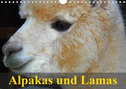 Alpakas und Lamas (Wandkalender 2021 DIN A4 quer) von Stanzer,  Elisabeth