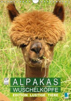 Alpakas: Wuschelköpfe – Edition lustige Tiere (Wandkalender 2019 DIN A4 hoch) von CALVENDO,  k.A.