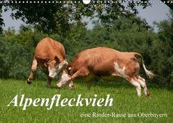 Alpenfleckvieh (Wandkalender 2018 DIN A3 quer) von Gasteiger,  Karolina