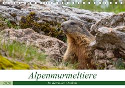 Alpenmurmeltiere – Im Reich der Mankeis (Tischkalender 2020 DIN A5 quer) von Di Chito,  Ursula
