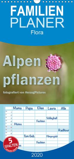 Alpenpflanzen fotografiert von HerzogPictures – Familienplaner hoch (Wandkalender 2020 , 21 cm x 45 cm, hoch) von HerzogPictures