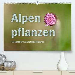 Alpenpflanzen fotografiert von HerzogPictures (Premium, hochwertiger DIN A2 Wandkalender 2020, Kunstdruck in Hochglanz) von HerzogPictures