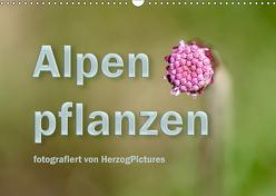 Alpenpflanzen fotografiert von HerzogPictures (Wandkalender 2019 DIN A3 quer) von HerzogPictures