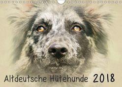 Altdeutsche Hütehunde 2018 (Wandkalender 2018 DIN A4 quer) von Redecker,  Andrea