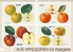 Alte Apfelsorten für Allergiker (Wandkalender 2018 DIN A3 quer) von M. Laube,  Lucy