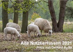 Alte Nutztierrassen 2021 (Wandkalender 2021 DIN A2 quer) von Butke,  Gerhard