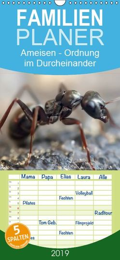 Ameisen – Ordnung im Durcheinander – Familienplaner hoch (Wandkalender 2019 , 21 cm x 45 cm, hoch) von Roder,  Peter