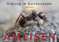 Ameisen – Ordnung im Durcheinander (Tischkalender 2019 DIN A5 quer) von Roder,  Peter