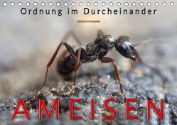 Ameisen – Ordnung im Durcheinander (Tischkalender 2020 DIN A5 quer) von Roder,  Peter