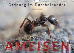 Ameisen – Ordnung im Durcheinander (Wandkalender 2019 DIN A4 quer) von Roder,  Peter