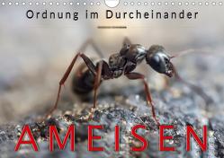 Ameisen – Ordnung im Durcheinander (Wandkalender 2020 DIN A4 quer) von Roder,  Peter