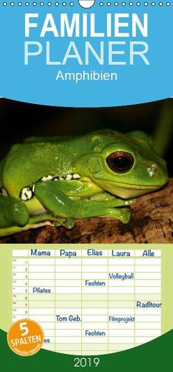 Amphibien – Familienplaner hoch (Wandkalender 2019 , 21 cm x 45 cm, hoch) von Hultsch,  Heike