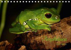Amphibien (Tischkalender 2019 DIN A5 quer) von Hultsch,  Heike