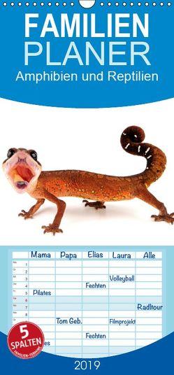 Amphibien und Reptilien – Familienplaner hoch (Wandkalender 2019 , 21 cm x 45 cm, hoch) von Trapp,  Benny