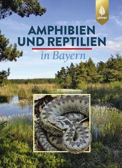 Amphibien und Reptilien in Bayern von Andrä,  Eberhard, Aßmann,  Otto, Dürst,  Thomas, Hansbauer,  Günter, Zahn,  Andreas